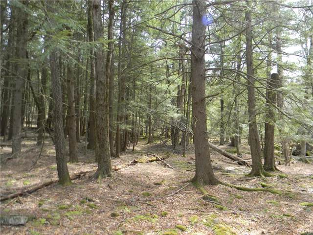 Big Woods Road, Harris, NY 12742 (MLS #5125583) :: William Raveis Legends Realty Group