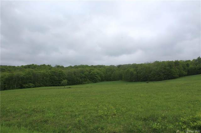 Little Fuller Road, Roscoe, NY 12776 (MLS #H4941268) :: Kevin Kalyan Realty, Inc.