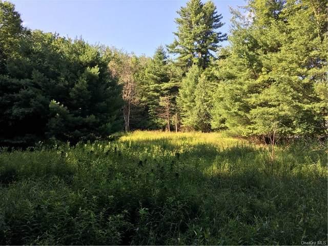 173 Bushville Swan Lake Road, Bethel, NY 12734 (MLS #H4964040) :: RE/MAX Edge