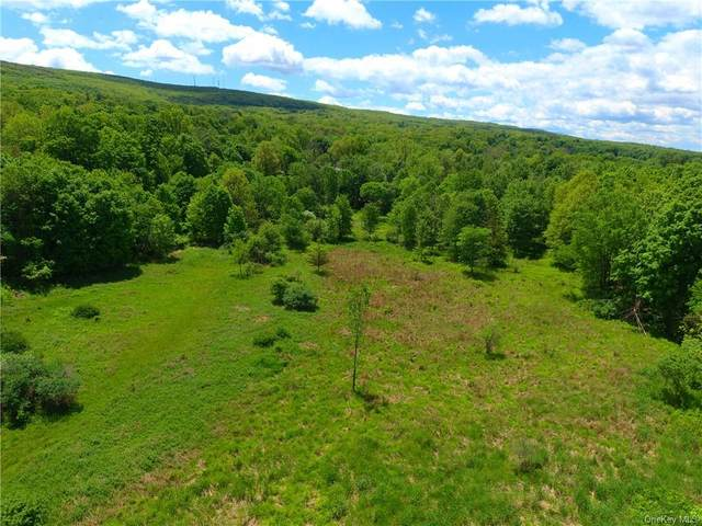 Clove Road, Blooming Grove, NY 10914 (MLS #H6040581) :: William Raveis Baer & McIntosh
