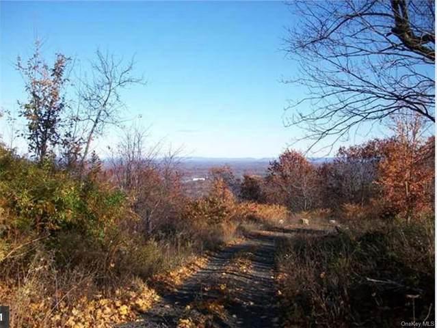 338 Mountain Road, Mamakating, NY 12790 (MLS #H6041012) :: Cronin & Company Real Estate