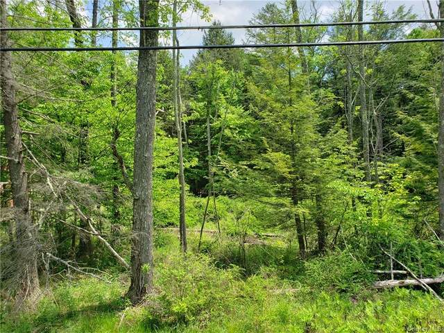 Nys Hwy Rt. 55, Bethel, NY 12720 (MLS #H6041937) :: William Raveis Legends Realty Group