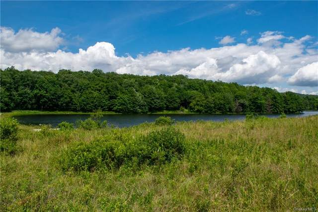 Tanzman Road N, Parksville, NY 12768 (MLS #H6052210) :: Frank Schiavone with William Raveis Real Estate