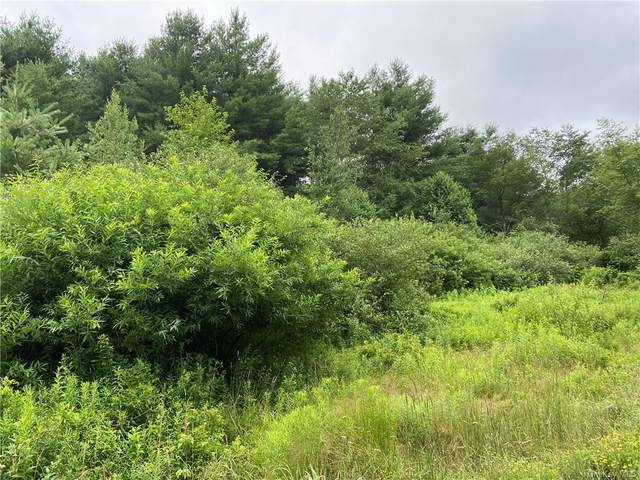 00 Tr #40, Narrowsburg, NY 12764 (MLS #H6054309) :: Frank Schiavone with William Raveis Real Estate
