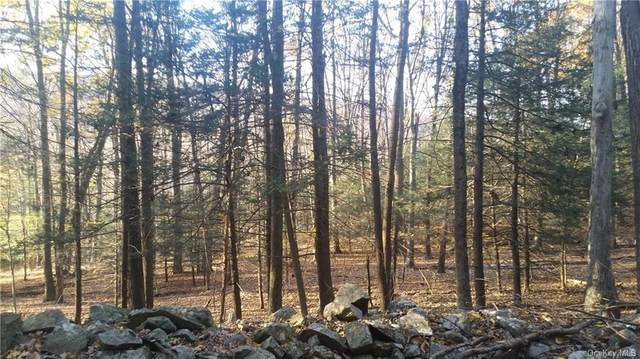 Lot 1 Lakes Road, Monroe, NY 10990 (MLS #H6059722) :: William Raveis Baer & McIntosh