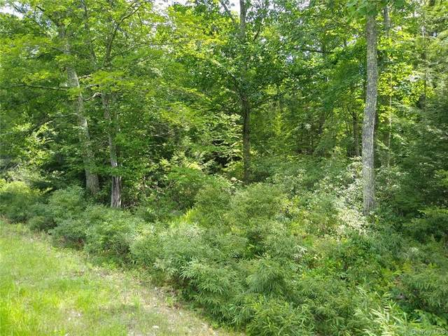 Fox Hill Road Tr 55, Fallsburg, NY 12733 (MLS #H6060765) :: Frank Schiavone with William Raveis Real Estate
