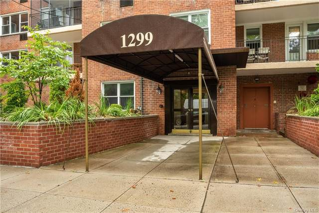 1299 Palmer Avenue #337, Larchmont, NY 10538 (MLS #H6070417) :: Frank Schiavone with William Raveis Real Estate