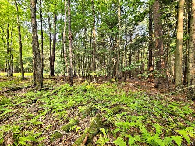 Andrew Lane, White Lake, NY 12786 (MLS #H6071646) :: Mark Seiden Real Estate Team