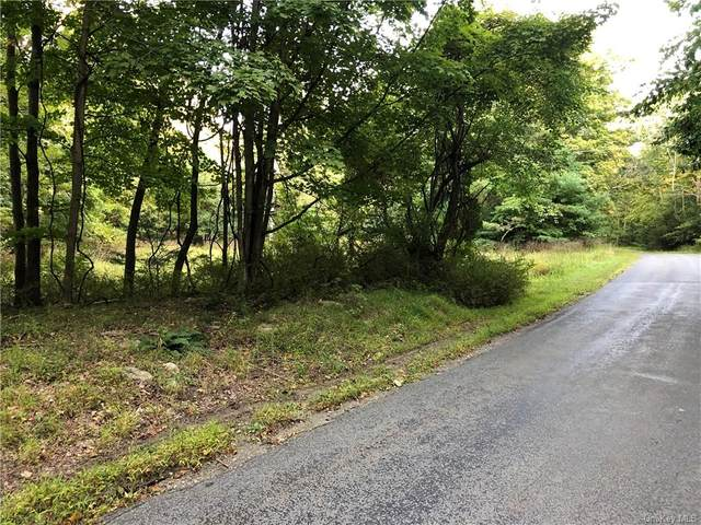 Wilkins Road, Pine Bush, NY 12566 (MLS #H6072116) :: The McGovern Caplicki Team
