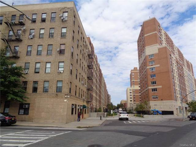 823 E 147th Street #53, Bronx, NY 10455 (MLS #H6074566) :: Nicole Burke, MBA | Charles Rutenberg Realty