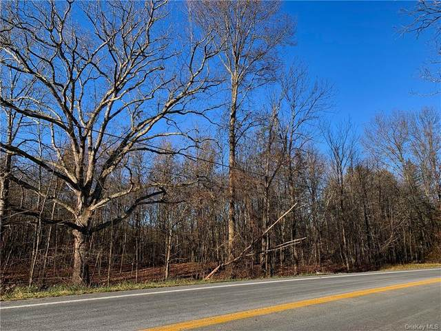 Coldenham Road, Montgomery, NY 12549 (MLS #H6074649) :: Corcoran Baer & McIntosh