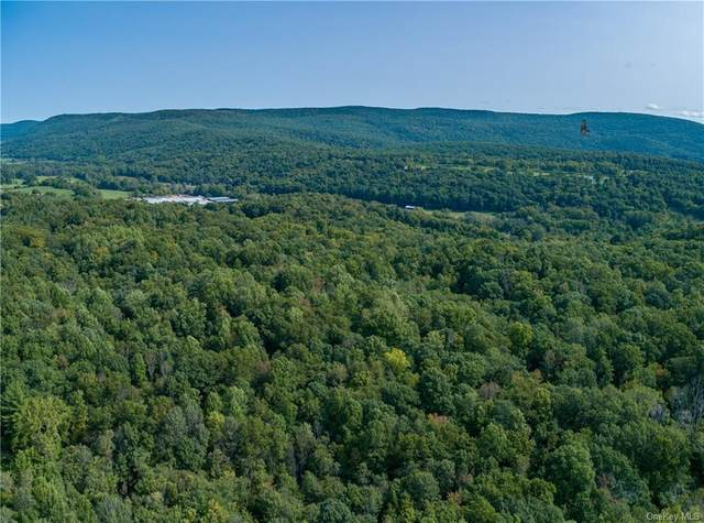 Route 22, Wingdale, NY 12522 (MLS #H6076644) :: Kendall Group Real Estate | Keller Williams
