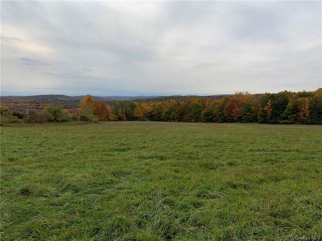 Fox Mountain Road W, White Sulphur Spring, NY 12758 (MLS #H6077935) :: William Raveis Baer & McIntosh