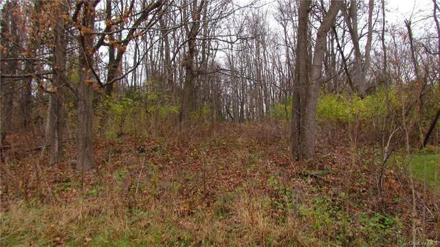 Albany Post Road, Rhinebeck, NY 12572 (MLS #H6082888) :: Kevin Kalyan Realty, Inc.