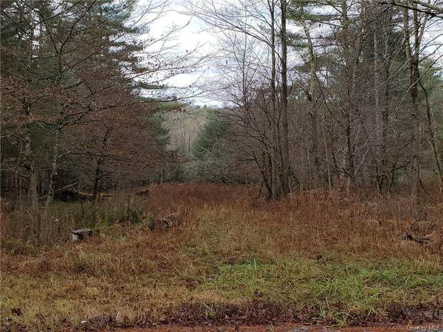 Mitchell Pond E, Cochecton, NY 12726 (MLS #H6083111) :: William Raveis Baer & McIntosh