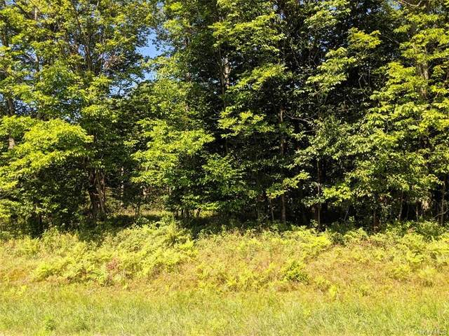 Blackberry Lake Road, Jeffersonville, NY 12748 (MLS #H6083198) :: Keller Williams Points North - Team Galligan