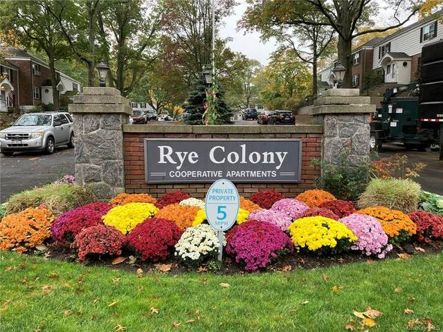 5 Peck Avenue 51B, Rye, NY 10580 (MLS #H6083357) :: William Raveis Baer & McIntosh