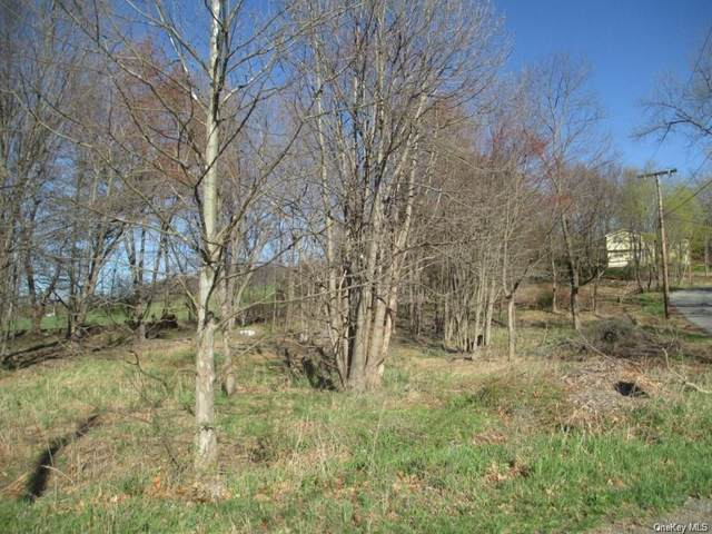Perry Creek Road & Ivy, Washingtonville, NY 10992 (MLS #H6084182) :: Cronin & Company Real Estate