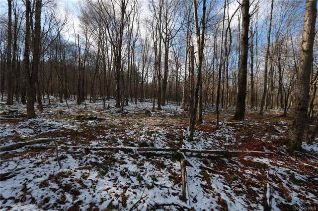 11.2.10 Benton Hollow Road W, Livingston Manor, NY 12758 (MLS #H6085764) :: Marciano Team at Keller Williams NY Realty