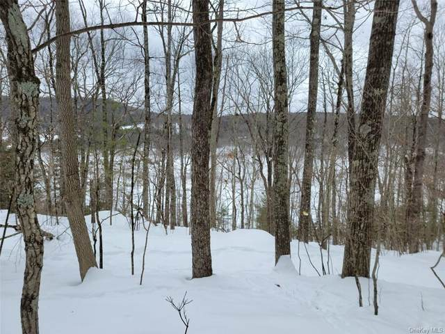 Lot 1.5 Skinners Falls Road, Narrowsburg, NY 12764 (MLS #H6097075) :: McAteer & Will Estates | Keller Williams Real Estate