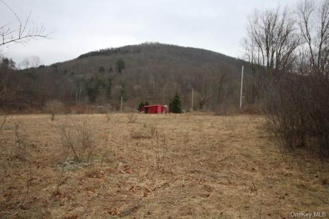 County Hwy 17, Roscoe, NY 12776 (MLS #H6105114) :: Signature Premier Properties