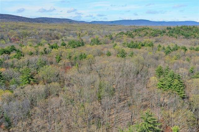 Nashopa Road, Pine Bush, NY 12721 (MLS #H6111150) :: Cronin & Company Real Estate