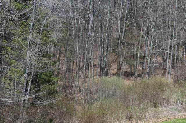 Old Route 17 Road, Roscoe, NY 12776 (MLS #H6111288) :: Signature Premier Properties