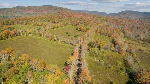 219 Turkey Ridge Road, Fleischmanns, NY 12430 (MLS #H6111410) :: Signature Premier Properties