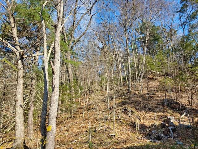4 Frozen Ridge/Kathleen Heights Road, Newburgh, NY 12550 (MLS #H6114294) :: Signature Premier Properties