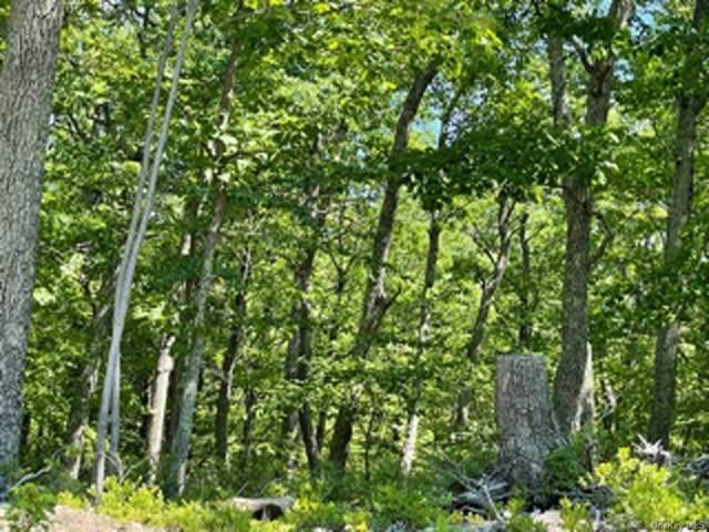 Schneller Lane, Pine Bush, NY 12566 (MLS #H6122106) :: Corcoran Baer & McIntosh
