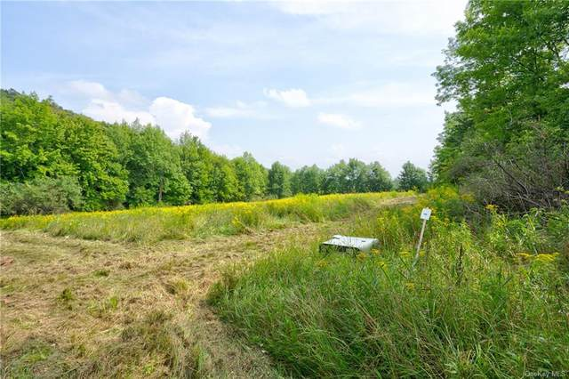 Middle Pasture Overlook Circle, Fremont Center, NY 12736 (MLS #H6136265) :: McAteer & Will Estates | Keller Williams Real Estate