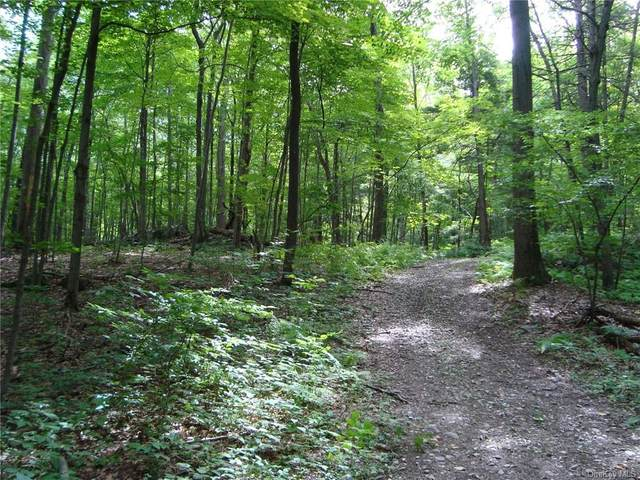 11 Deer Hill Road, Hyde Park, NY 12538 (MLS #H6137324) :: McAteer & Will Estates | Keller Williams Real Estate