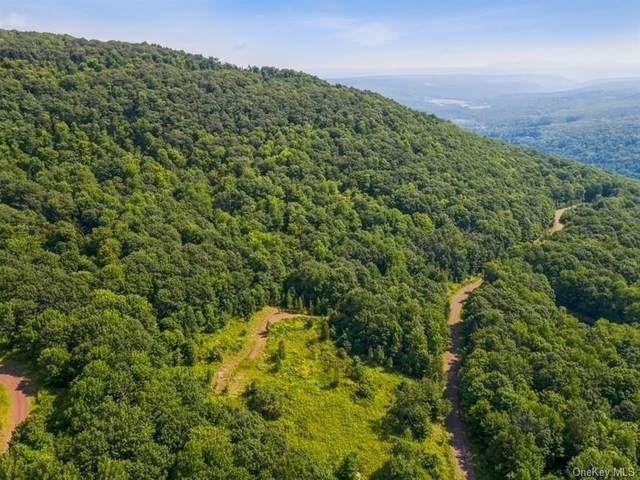 Castle Mountain Lane, Call Listing Agent, NY 12167 (MLS #H6140543) :: Carollo Real Estate
