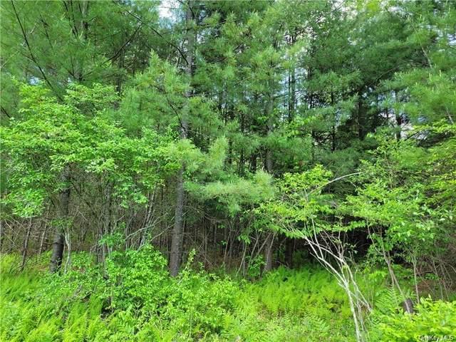 Dingle Daisy Road, Monticello, NY 12701 (MLS #H6144151) :: Goldstar Premier Properties