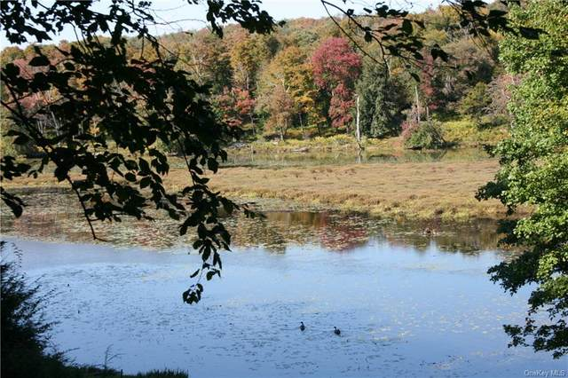 1043 County Highway 93, Roscoe, NY 12736 (MLS #H6147169) :: Cronin & Company Real Estate
