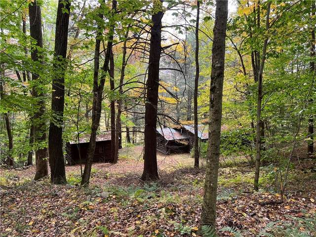 6000 County Hwy 17, East Branch, NY 13783 (MLS #H6148306) :: Carollo Real Estate
