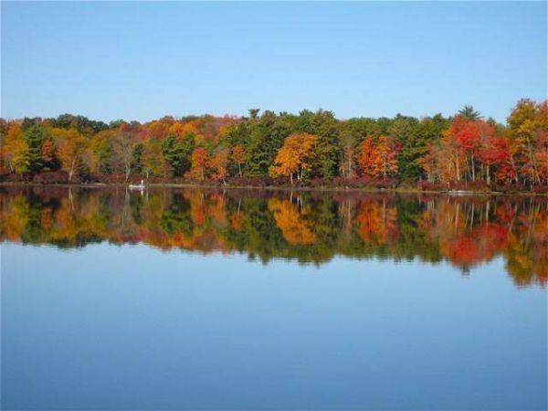 Black Lake Road, Bethel, NY 12720 (MLS #4211958) :: Mark Boyland Real Estate Team
