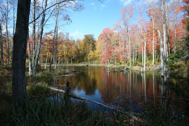 Lot 79 Stonegate Road, call Listing Agent, PA 18417 (MLS #4214301) :: Stevens Realty Group