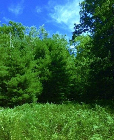 (65) Upper Lumber Road, Glen Spey, NY 12737 (MLS #4219246) :: Mark Seiden Real Estate Team