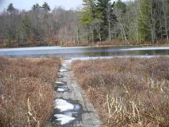 40.-1-92.2 Deer Meadow Road, White Lake, NY 12786 (MLS #4220115) :: Mark Seiden Real Estate Team