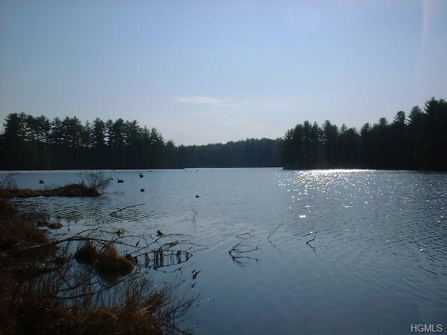 Swamp Pond Road Tr 37, Narrowsburg, NY 12764 (MLS #4814714) :: Mark Boyland Real Estate Team