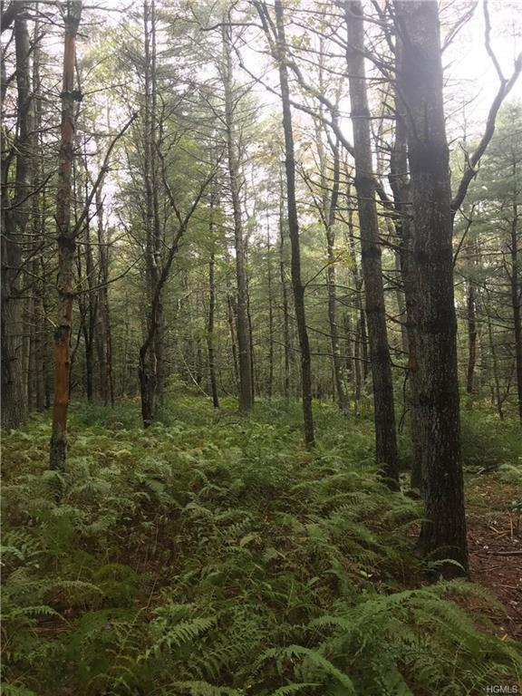 County Route 115, Cochecton, NY 12726 (MLS #4847030) :: Stevens Realty Group