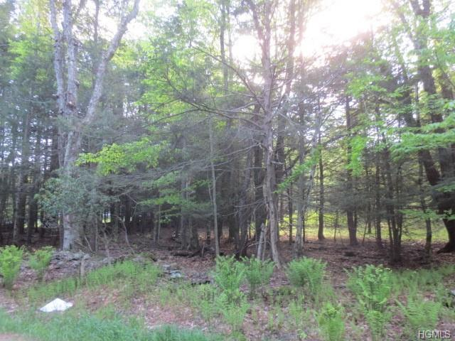 Tusten Place, Bethel, NY 12720 (MLS #4915294) :: William Raveis Legends Realty Group