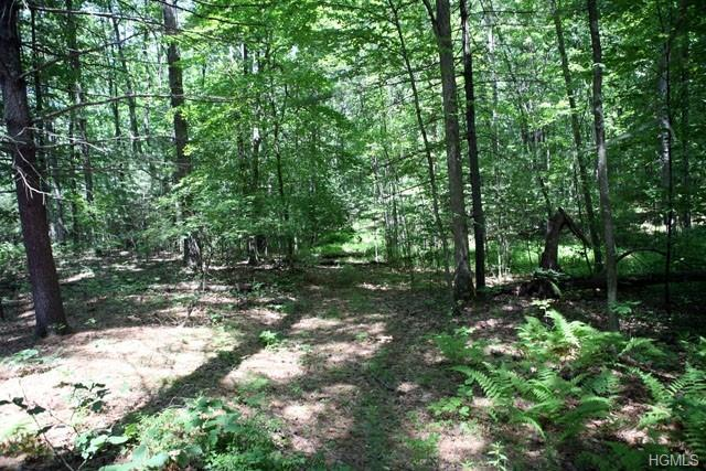 Skinners Falls Road, Cochecton, NY 12726 (MLS #4923458) :: Shares of New York