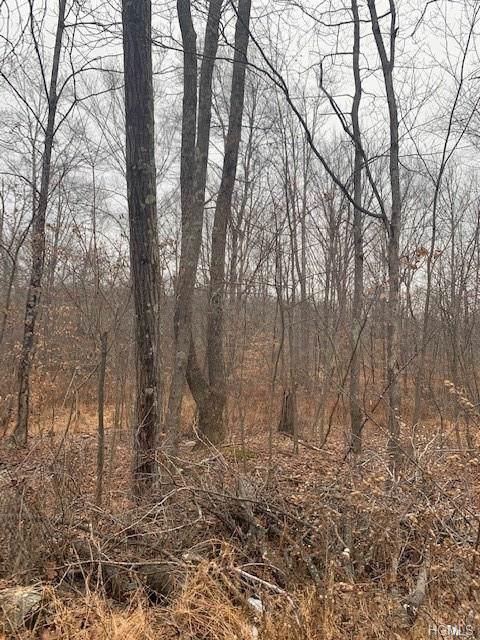Twin Oaks Lane, Pine Bush, NY 12566 (MLS #5127178) :: Mark Boyland Real Estate Team