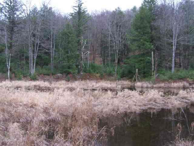 (39.4) Starlight Drive, Thompson, NY 12701 (MLS #H4203102) :: William Raveis Baer & McIntosh