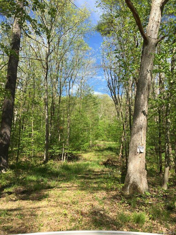 Skinner Falls Road, Cochecton, NY 12726 (MLS #H6040835) :: Mark Seiden Real Estate Team