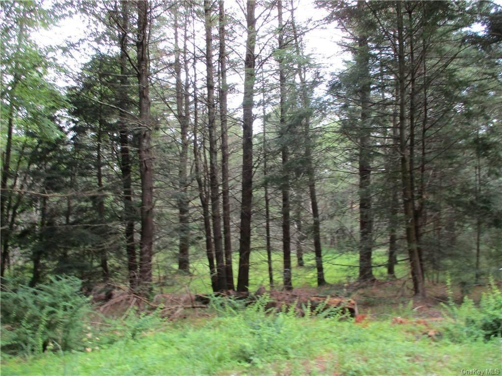 Upper Pine Kill Road - Photo 1