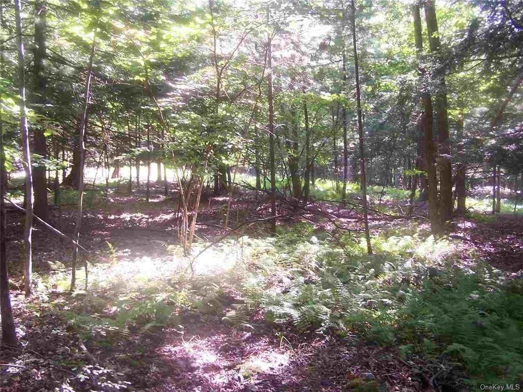 Lot 42.120 Samsonville Road - Photo 1