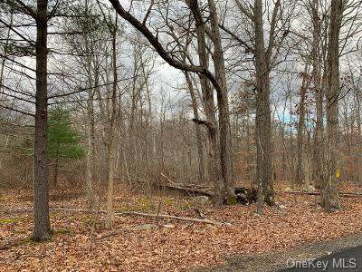 Redder Road, Pine Bush, NY 12566 (MLS #H6084977) :: Cronin & Company Real Estate